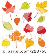 Royalty Free RF Clipart Illustration Of A Digital Collage Of Different Autumn Leaves