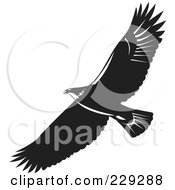 Black And White Eagle Flying