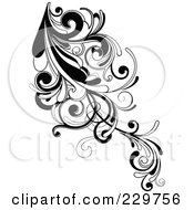 Black And White Flourish Design 1