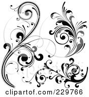 Digital Collage Of Black And White Flourish Designs 2