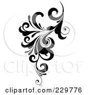 Black And White Flourish Design 7