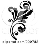 Black And White Flourish Design 2