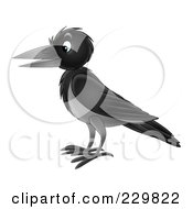 Royalty Free RF Clipart Illustration Of A Black Crow 2