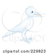 Royalty Free RF Clipart Illustration Of A White Crow by Alex Bannykh