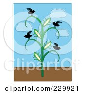 Birds On A Corn Stalk
