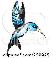 Blue Hummingbird In Flight