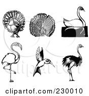 Royalty Free RF Clipart Illustration Of A Digital Collage Of Woodcut Styled Turkey Peacock Swan Flamingo Hummingbird And Ostrich Birds