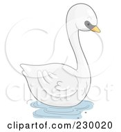 Cute Mute Swan