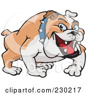 Royalty Free RF Clipart Illustration Of A Tan And White Bulldog Wearing A Spiked Collar by Dennis Holmes Designs