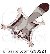 Royalty Free RF Clipart Illustration Of A Flying Sugar Glider