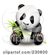 Panda Sitting And Holding Bamboo