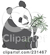 Giant Panda Sitting And Holding A Stalk Of Bamboo