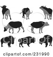 Digital Collage Of Black And White Buffalo