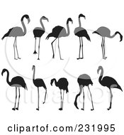 Digital Collage Of Black And White Flamingos