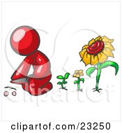 Clipart Illustration Of A Red Man Kneeling By Growing Sunflowers To Plant Seeds In A Dirt Hole In A Garden