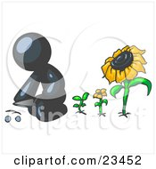 Clipart Illustration Of A Navy Blue Man Kneeling By Growing Sunflowers To Plant Seeds In A Dirt Hole In A Garden