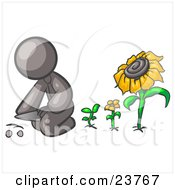 Gray Man Kneeling By Growing Sunflowers To Plant Seeds In A Dirt Hole In A Garden