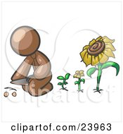 Clipart Illustration Of A Brown Man Kneeling By Growing Sunflowers To Plant Seeds In A Dirt Hole In A Garden