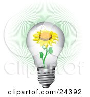 Blooming Yellow Sunflower Inside Of A Bright Clear Glass Lightbulb With A Green Burst