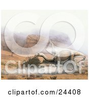Plateosaurus And One Coelophysis Dinosaurs Roaming A Desert Landscape With Rocky Mountains And Fog