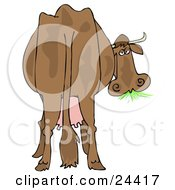 Clipart Illustration Of A Brown Dairy Cow With Udders Looking Back At The Viewer And Grazing On Grass by Dennis Cox