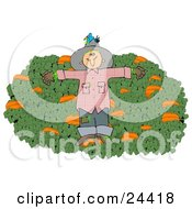 Clipart Illustration Of A Blue Bird Nesting In The Hat Of A Scarecrow In A Pumpkin Patch