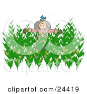 Clipart Illustration Of A Nesting Bluebird In The Hat Of A Scarecrow In A Corn Field