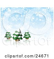 Three Evergreen Trees Flocked In Snow Over A Reflective White Surface And A Blue And White Snowflake Background