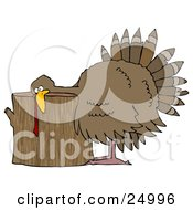 Plump Turkey Resting Its Head On A Wood Stump Chopping Block Ready To Be Killed For Thanksgiving