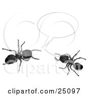 Two Black Worker Ants Holding A Conversation Under A Text Bubble
