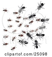 Clipart Illustration Of Large Black Worker Ants Attacking Smaller Brown Ants While At War by Leo Blanchette