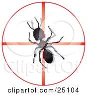 Big Black Worker Ant In The Center Of A Red Target