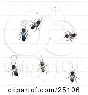 Worker Ants With Numbers On Their Backs Crawling On Graph Paper With Dotted Lines And Circles