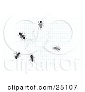 Clipart Illustration Of A Group Of Ants Crawling Around Over A Drawing Of An Ant On Graph Paper