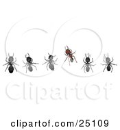 Clipart Illustration Of A Different Brown Ant Standing Out From A Horizontal Line Of Black Worker Ants by Leo Blanchette