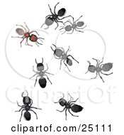 Clipart Illustration Of Black Sugar Ants Staring At And Creeping Towards A Different Brown Ant Symbolizing Leadership And Acceptance by Leo Blanchette