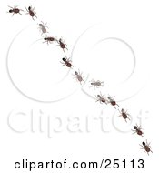 Clipart Illustration Of Worker Ants In A Single File Line Following The Leader Diagonally Across A Surface