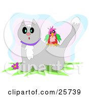 Clipart Illustration Of A Colorful Bird On The Back Of A Surprised Gray Cat With Snow On Its Head by bpearth