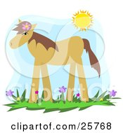 Cute Brown Pony Wearing A Flower In Its Mane Standing In A Spring Flower Field Under The Sunshine