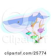 Clipart Illustration Of A Blue Whale Swimming Underwater With Blue Green And Purple Fish