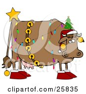 Brown Dairy Cow Decorated Like A Christmas Tree Wearing A Santa Hat Jingle Bells Baubles A Star And Slippers
