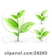 Clipart Illustration Of Three Sprouting Plants With Dew Drops On The Green Leaves On A White Background by beboy