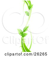 Clipart Illustration Of A Curvy Green Vine With Dew Drops On The Leaves On A White Background