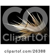 Clipart Illustration Of A Yellow And White Fractal Resembling Strands Of Hair Over A Black Background by KJ Pargeter