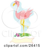 Clipart Illustration Of A Pink Flamingo Bird Standing With One Leg Up Over A Blank Banner