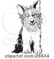 Yorkshire Terrier Dog Sitting In Black And White by David Rey