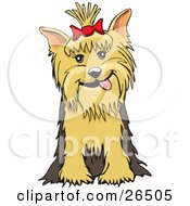 Friendly Yorkshire Terrier Dog With A Bow In Her Hair Sitting by David Rey