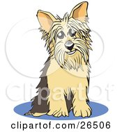 Yorkshire Terrier Dog Sitting On A Blue Rug by David Rey