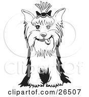 Friendly Yorkshire Terrier Dog With A Bow In Her Hair Sitting In Black And White by David Rey