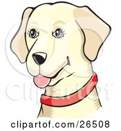 Friendly Yellow Labrador Dog Wearing A Red Collar by David Rey